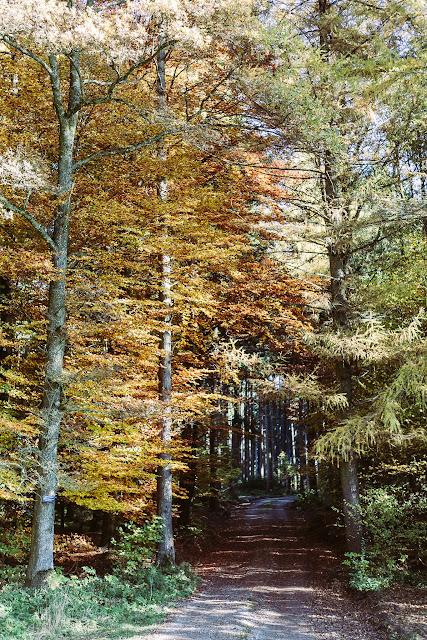 Herbstimpressionen, Natur, Pomponetti