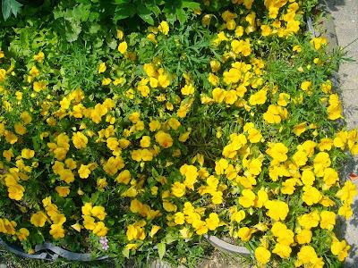 野崎観音 のざきまいり 花