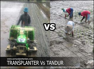 Transplanter Padi versus tanam Tandur (Tanam Konvensional)