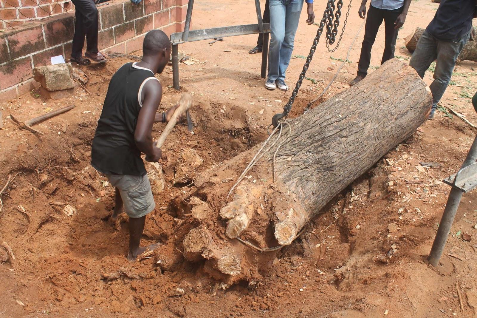 Nathan garoua abattage d 39 un arbre for Bordure autour d un arbre