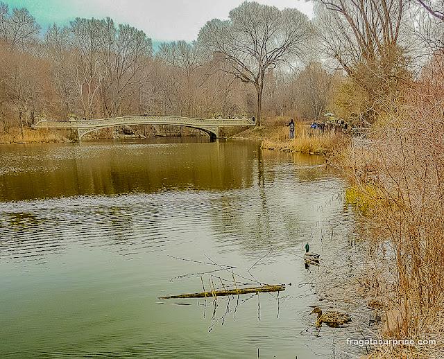 Patos no lago do Central Park e a Bow Bridge, Nova York