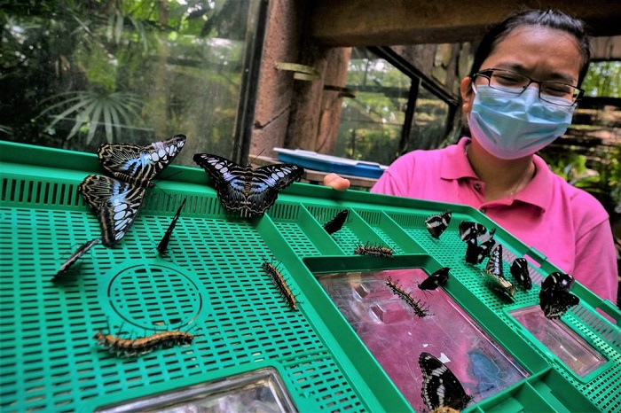 Save Melaka's Butterfly Farm-Adopt Butterfly Pupas Butterfly Park Ticket