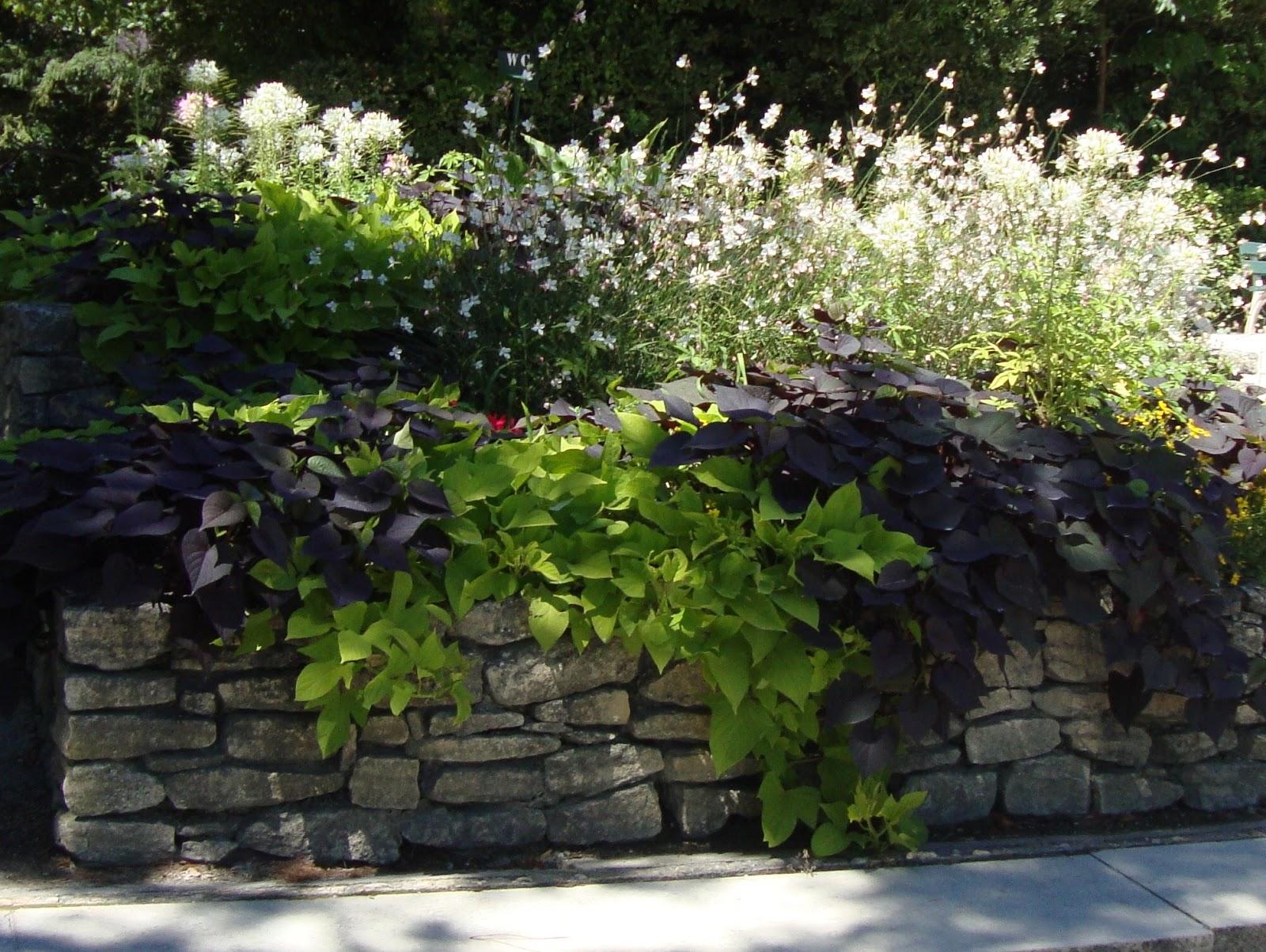 Un piccolo giardino in citt dalla francia citt e paesi - Sistemare un giardino ...