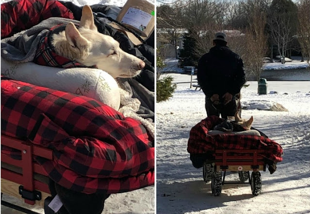 Хозяин катает парализованную собаку на тележке по парку!!!