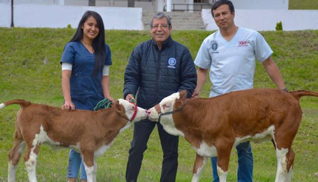 Peruanos clonan vaca alemana