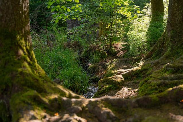 Premiumwanderweg Murgleiter | Etappe 3 von Forbach nach Schönmünzach | Wandern nördlicher Schwarzwald 09