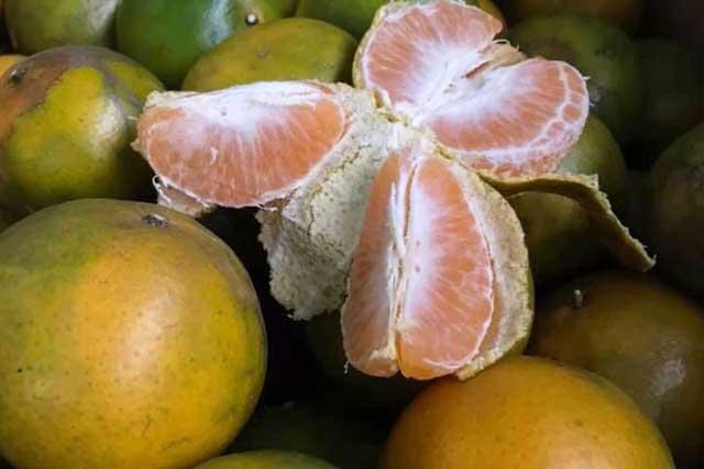 trái quýt nám sần xùi nhưng đậm vị, mọng nước và thơm lừng