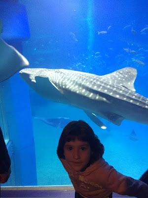 Paula delante de la pecera con el tiburón ballena detrás