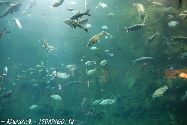 水庫裡的魚種類也相當多