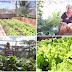 Quintais agroecológicos garantem segurança alimentar e renda para mais de 500 famílias do Semiárido baiano; Ponto Novo e Uauá são beneficiados