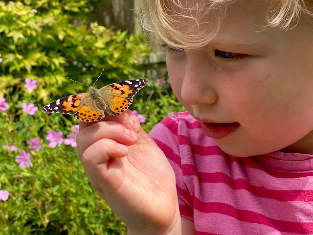 A 4 year old girl with a butterfly on her hand and looking at it closely letting the insectlore butterfly go