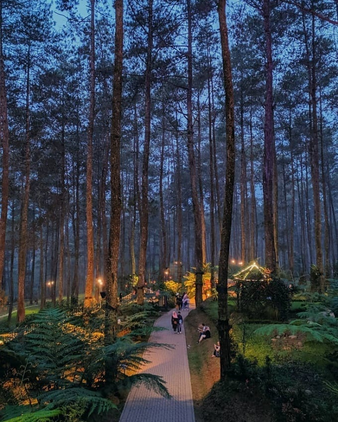 Tiket Masuk Cikole Lembang : tiket, masuk, cikole, lembang, Orchid, Forest, Cikole, Lembang, Lokasi, Harga, Tiket, Masuk, Terbaru, Wisata