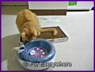 Carmine sniffs the Torus water bowl.