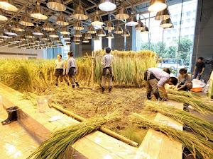 Negara-negara dengan Sistem Pertanian Terbaik di Dunia, Adakah Indonesia?