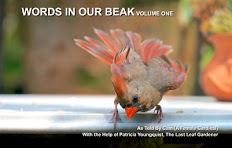 """Read """"WORDS IN OUR BEAK"""" (Soft-cover Vol 1)"""