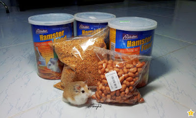 cam-nang-cach-nuoi-cham-soc-hamster-chuot-canh-thuc-an-tron-Rabster