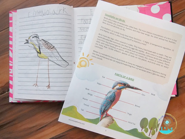 Nature journaling with a spotlight on birds.