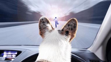 Hombre atropellado por perro a plena luz del día