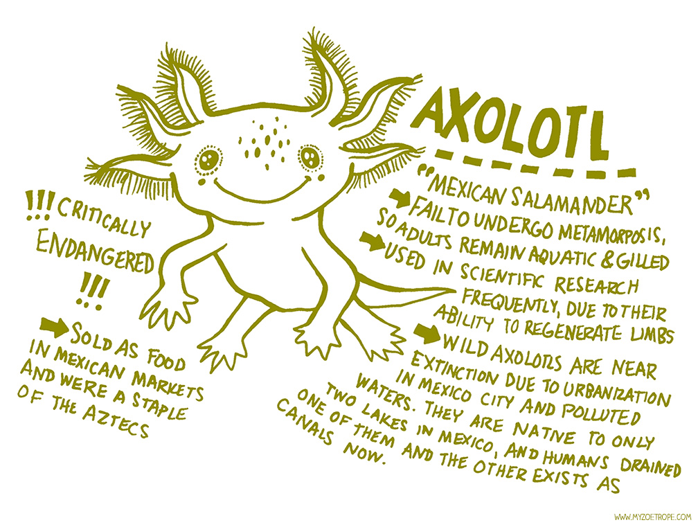 axolotl coloring pages - photo#24