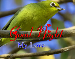 Latest Beautiful Good Night Wallpaper Free Download %2B53