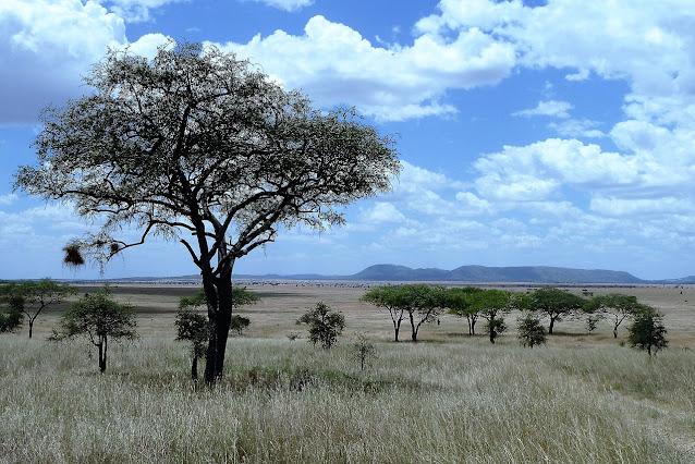 Hutan Sabana