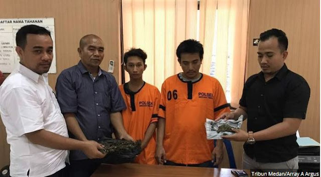 Lagi Sakau Kirain Ada Maling, 2 Pengedar Ganja Ini Teriak Maling Saat Hendak Ditangkap Polisi