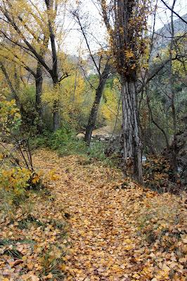 Caminando entre hojas de otoño
