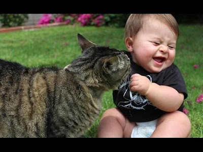 The most funny videos of the baby with animals