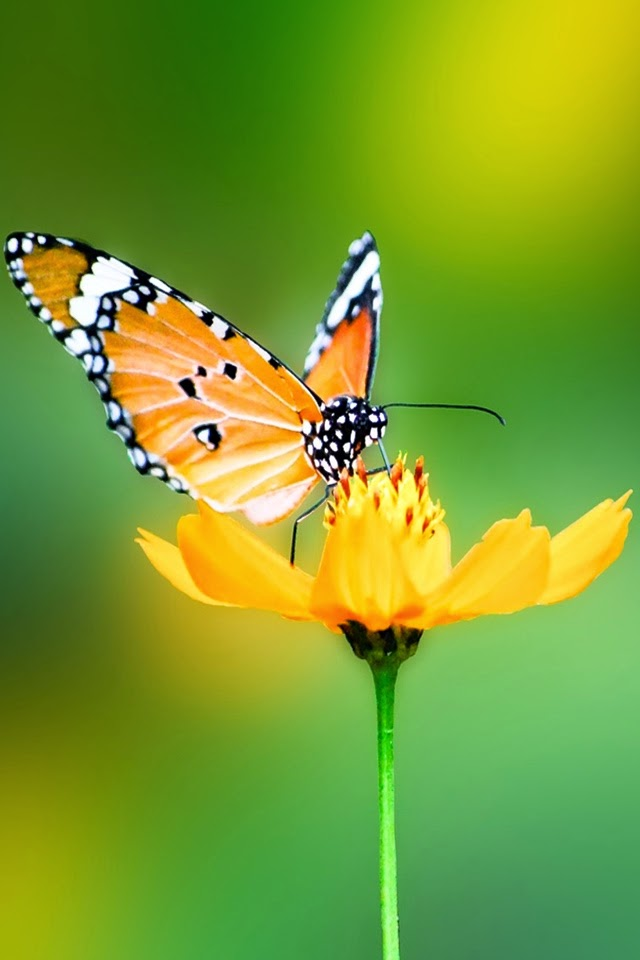 download butterfly wallpaper - photo #23
