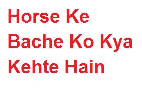 हॉर्स के बच्चे को क्या कहते हैं | Horse Ke Bache Ko Kya Kehte Hain
