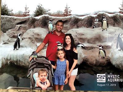 mystic aquarium penguin picture