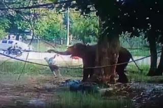 Cho ăn quá gần, người đàn ông này bị voi đánh chết
