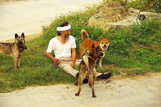 dogs, man,beach