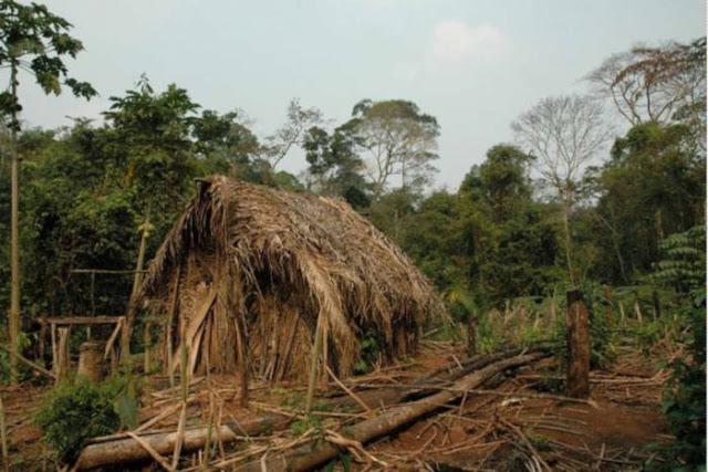Mengenal Lebih Dekat Tentang Suku-suku Yang Tingal Di Hutan Amazon