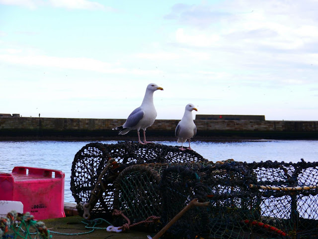 Favourite place in the North, Whitby seagulls