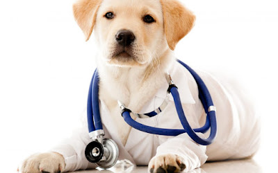 how to treat a dog with a cold