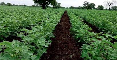 Organic farming in 2020