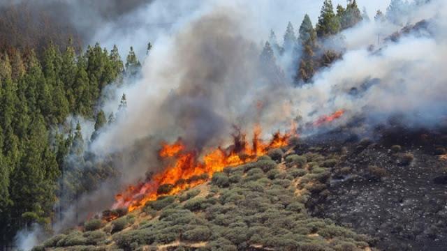 Πυρκαγιές σε Αρκαδία και Λακωνία