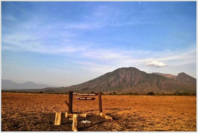 Padang Rumput Situbondo;10 Top Destinasi Wisata Situbondo;