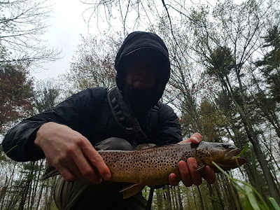 big brown trout massachusetts small stream
