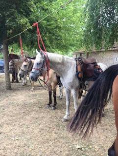 ratsastusvaellushevoset satuloidaan picnic tauolla