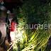 Detienen a sujeto por cosecha y cultivo de marihuana en San Javier