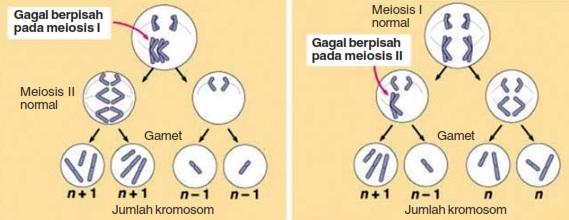 Pautan pindah silang dan gagal berpisah pada kromosom info gagal berpisah ccuart Choice Image