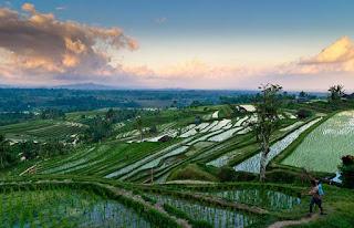 Wisata Alam Jatiluwih