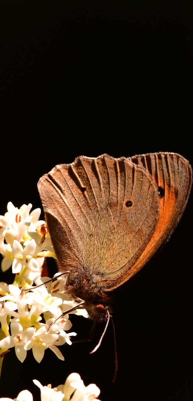 A lovely brown butterfly.