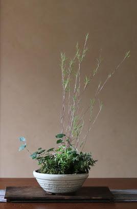 山野草盆栽 生徒さんの作品 年間通じて楽しめる鉢