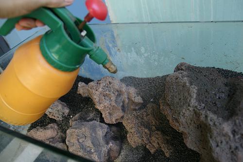 Cách cấy mini fiss thủy sinh lên đá và nền - phun nước làm ẩm