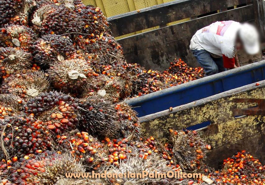 import minyak kelapa sawit india turun