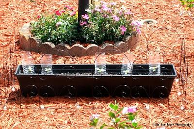 Chianti Hybrid Sunflower Seedlings Protective Covering