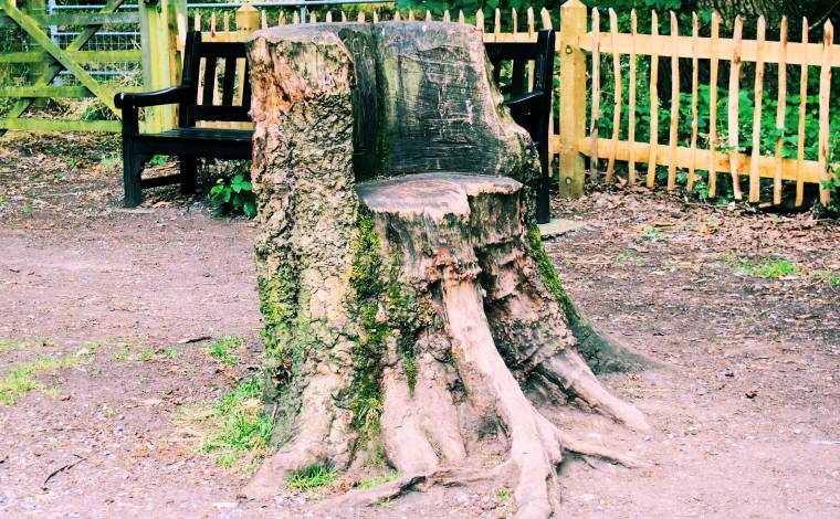 Grab Yourself A Seat!?! A Seat Made From A Tree